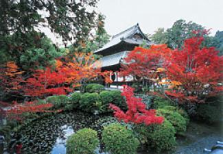 「総社市宝福寺紅葉」の画像検索結果
